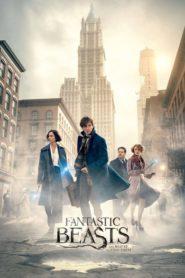 Fantastic Beasts and Where to Find Them /Фантастични животни и къде да ги намерим